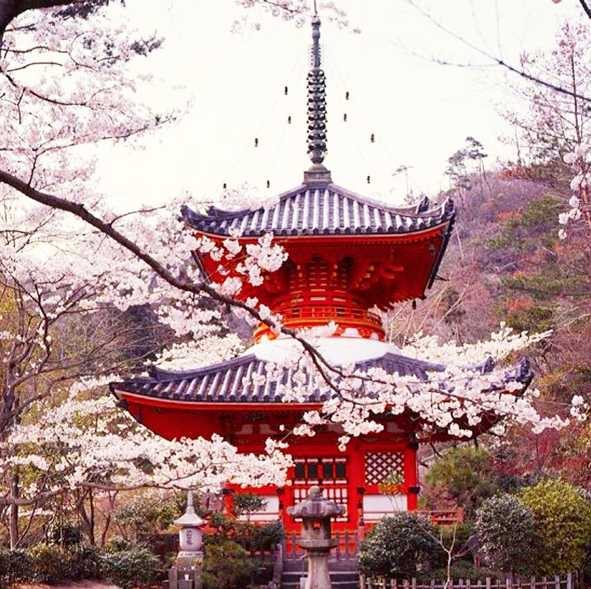 26 Sakura::Takeshi Murakami