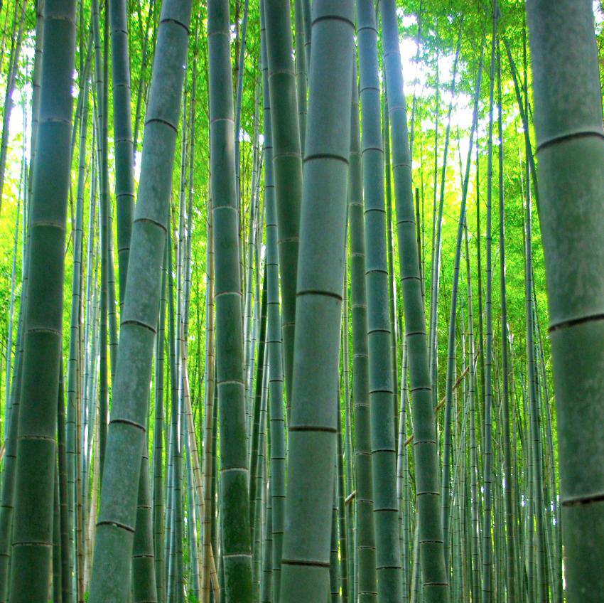 7a Arashiyama:Dominika Szczechowiczjpg