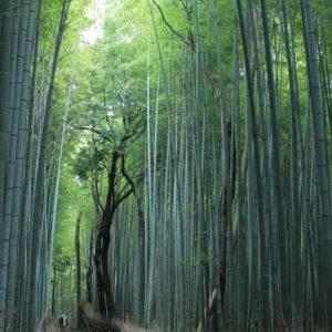 15 arashiyama1