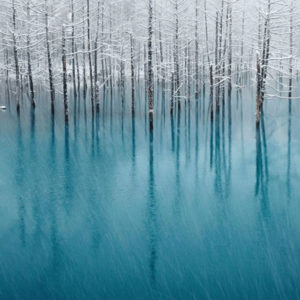 10-. Blue pond_wszystkiegojaponskiego.pl